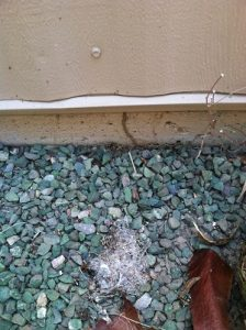 An image captured from a termite inspection of a termite tube climbing from the ground up an exterior wall.